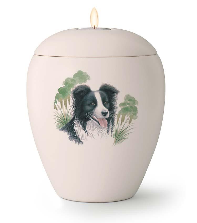 Middelgrote Honden Urn Border Collie (1.5 liter)